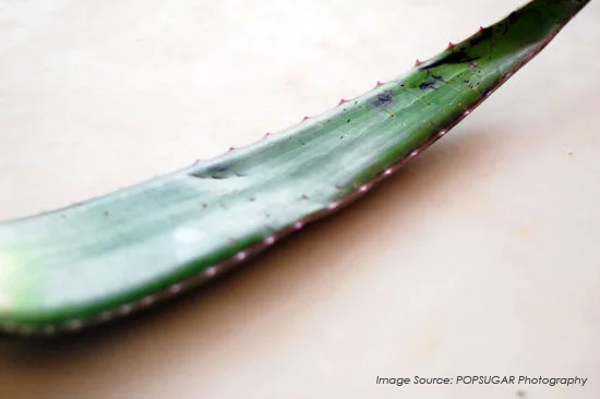 Yogagrit Blog - cold-pressed aloe vera juice benefits and smoothie blends